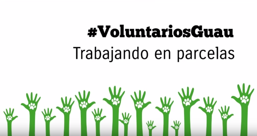 Voluntarios Guau